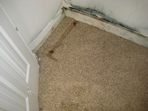 mold removal palmdale